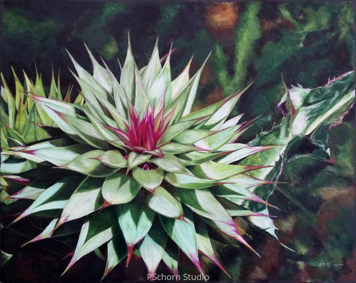 Colorado Cactus (large view)