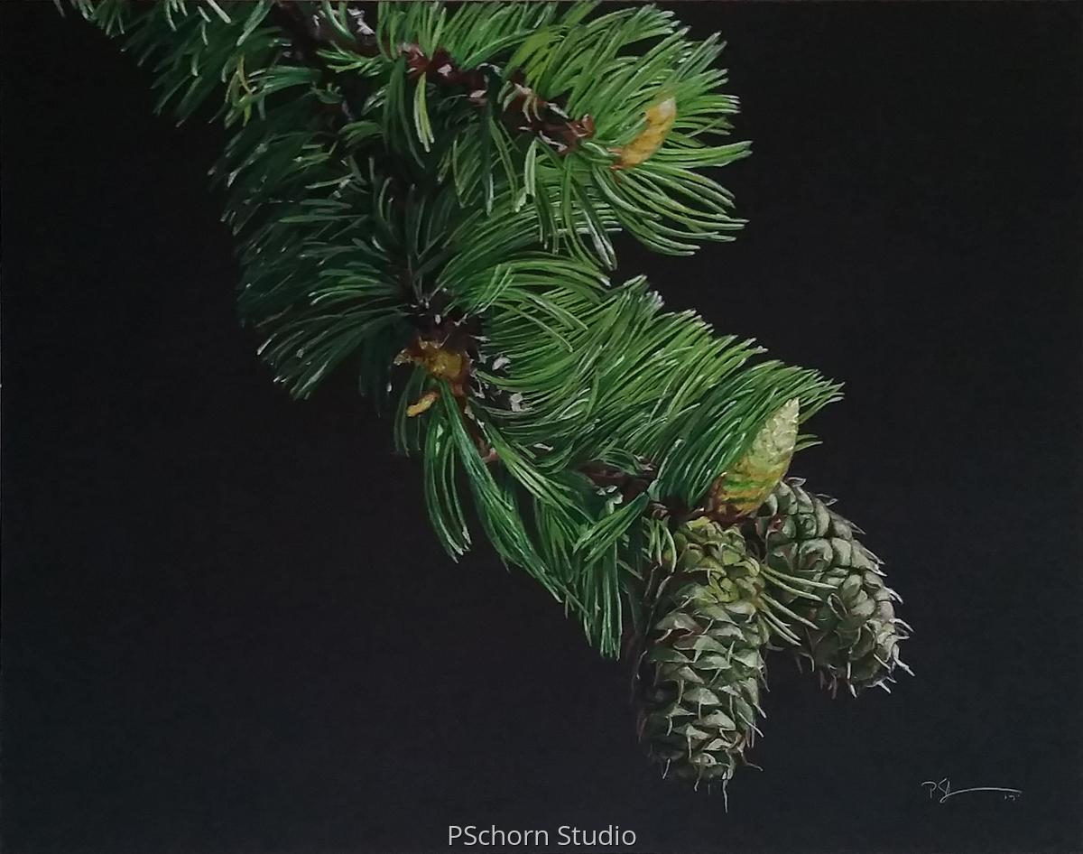 Colorado Pine (large view)
