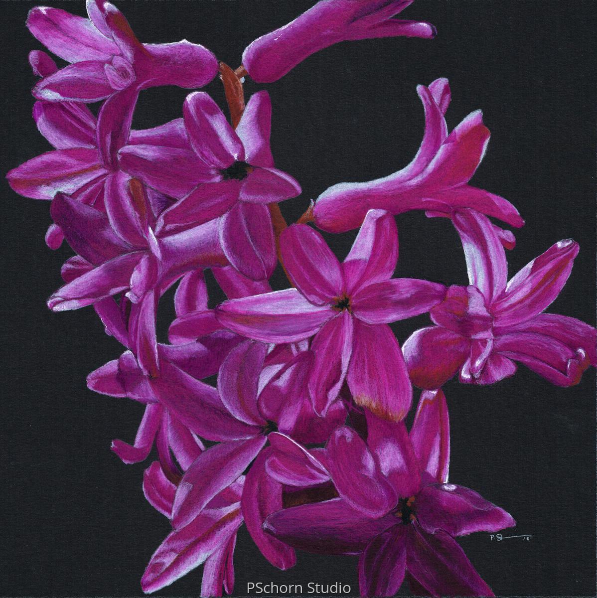Purple Hyacinth (large view)