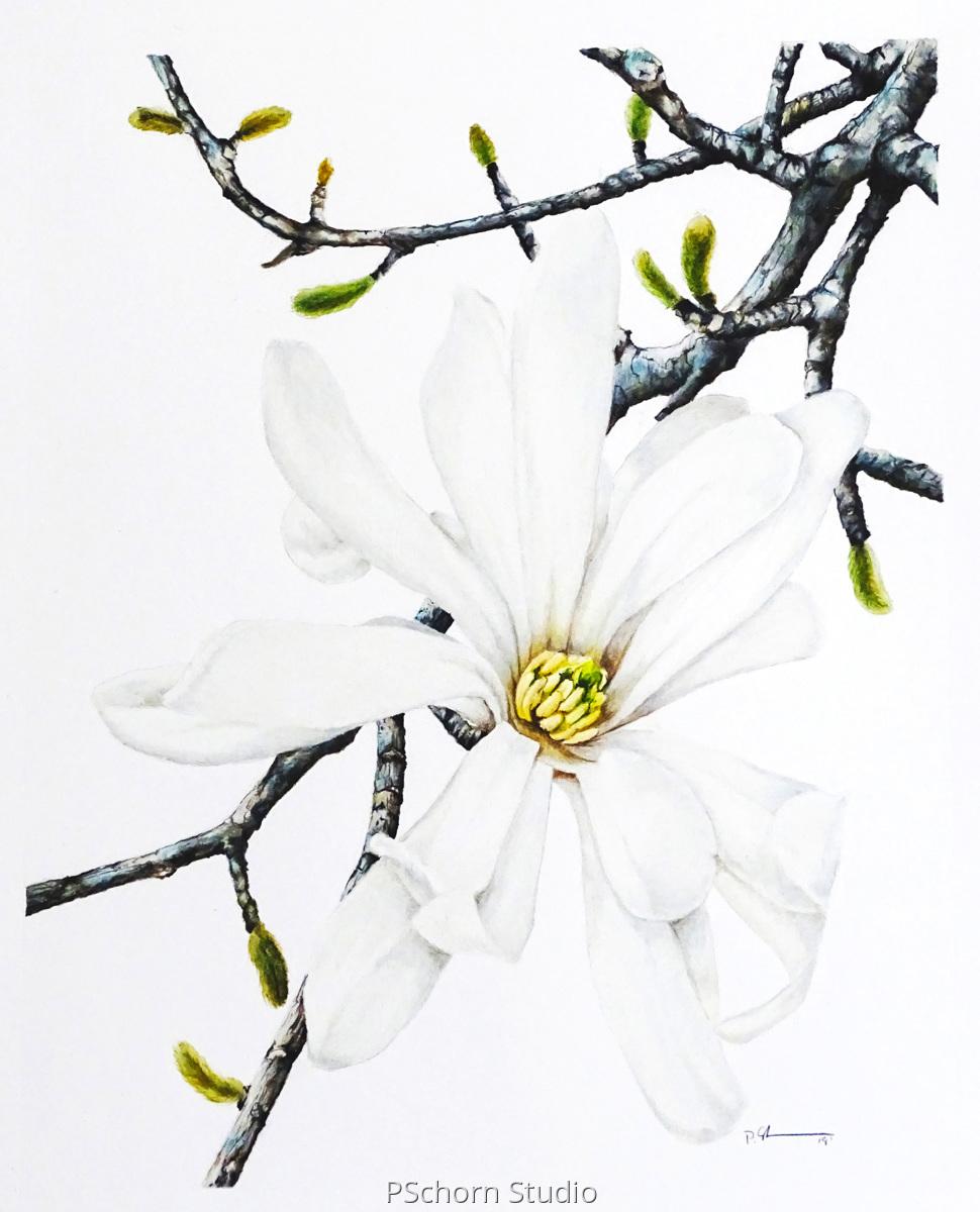 Full Bloom Magnolia (large view)