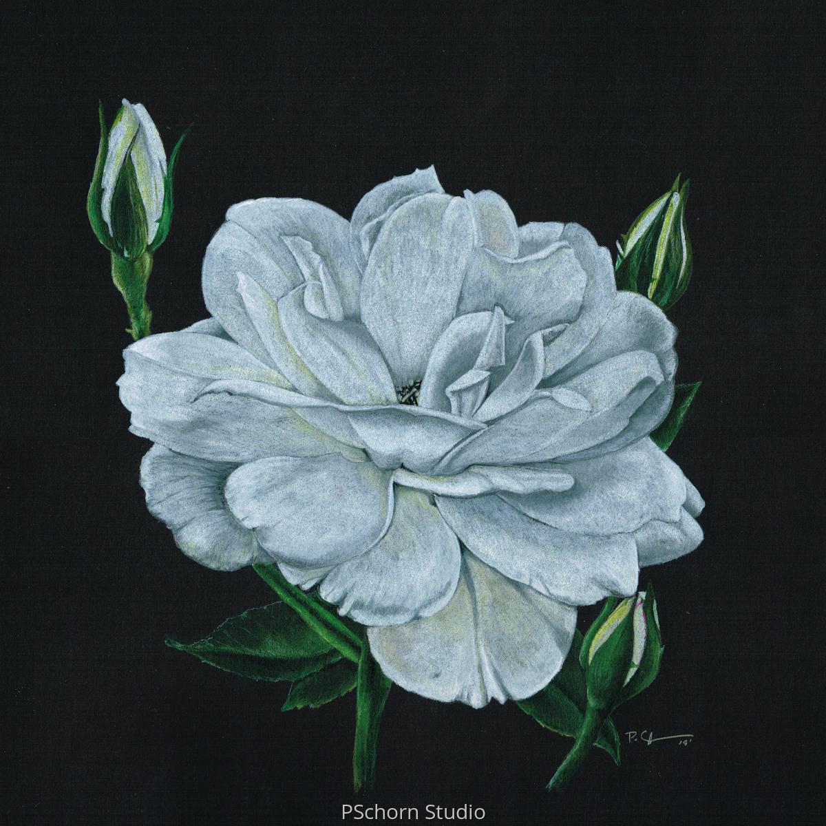 Botanical White Rose (large view)
