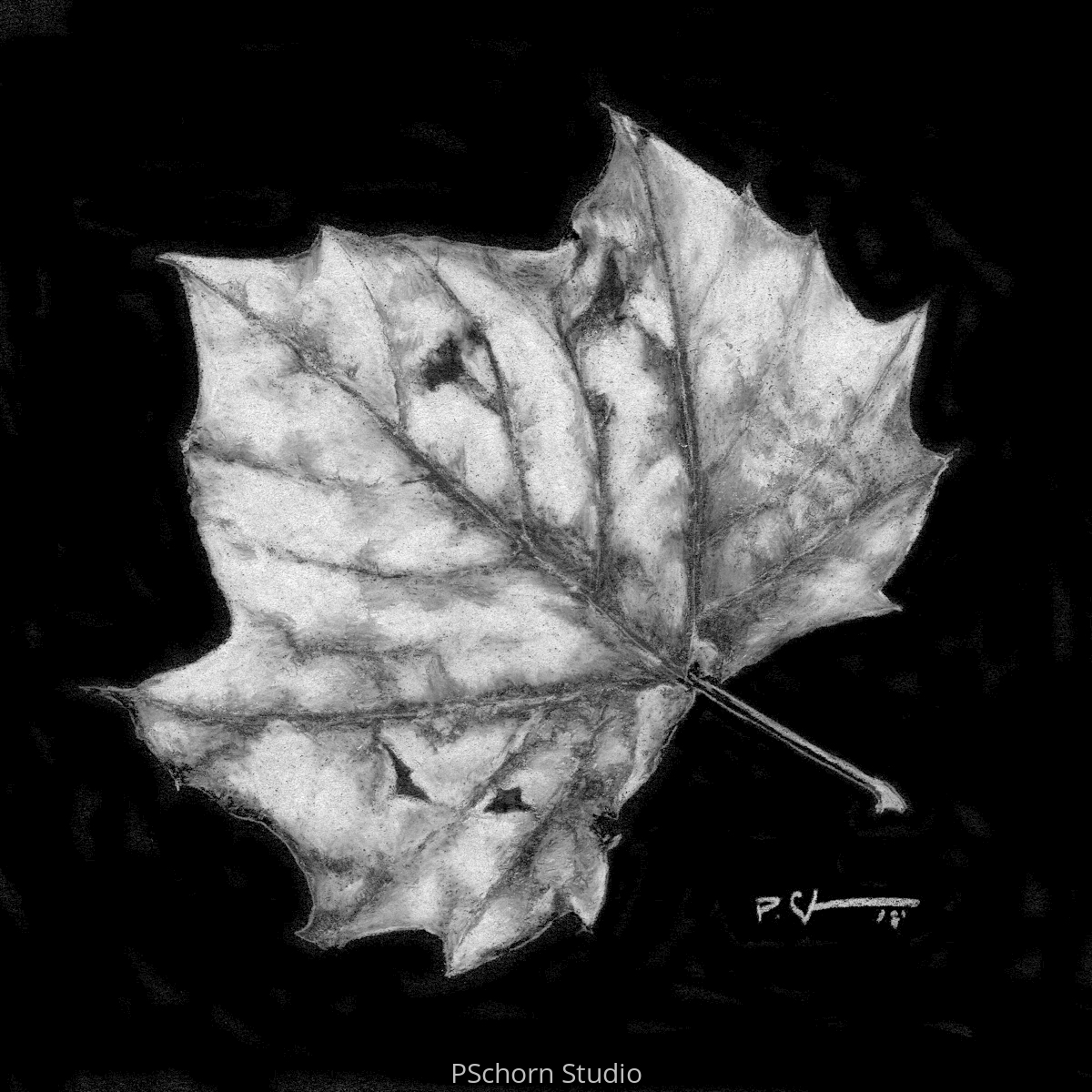 B/W Leaf (large view)
