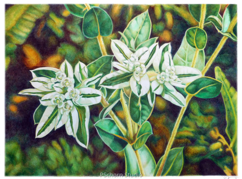 Kansas Flower by P Schorn Studio