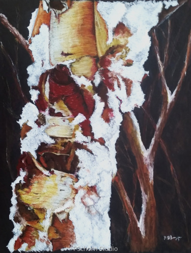 Snow Covered River Birch