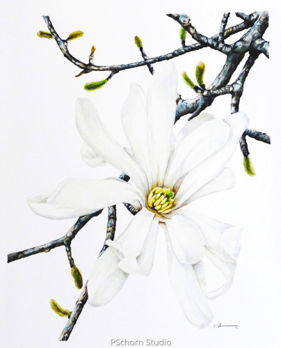 Full Bloom Magnolia
