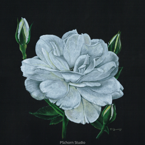 Botanical White Rose