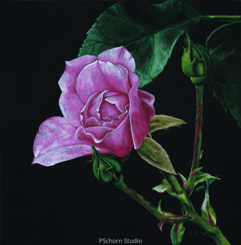 Botanical Pink Rose