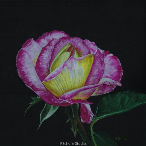 Botanical Fuchsia Rose (large view)