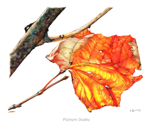 Random Fall Leaf by P Schorn Studio