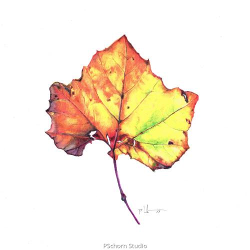 Random Oak Leaf