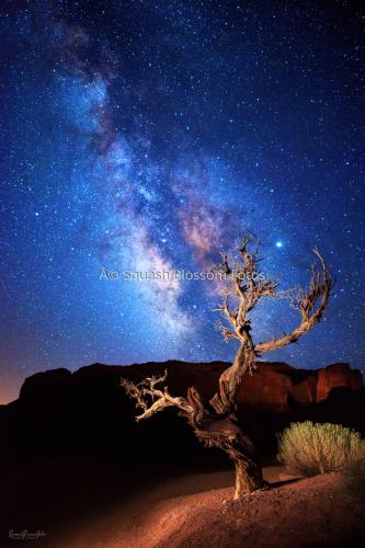 Star Dust Tree