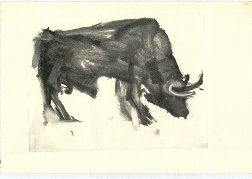 Bull (large view)