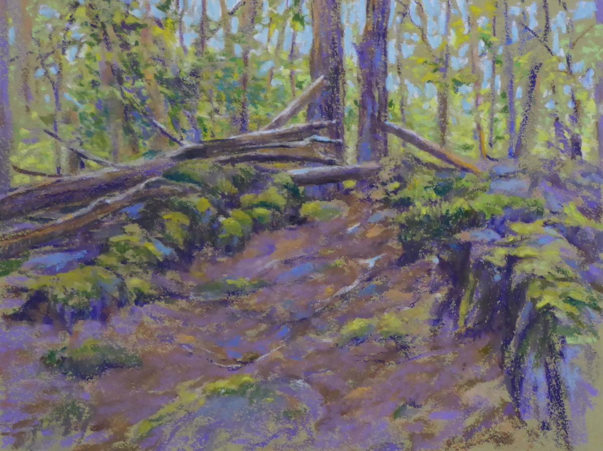 Bowdoin Park Woods (large view)
