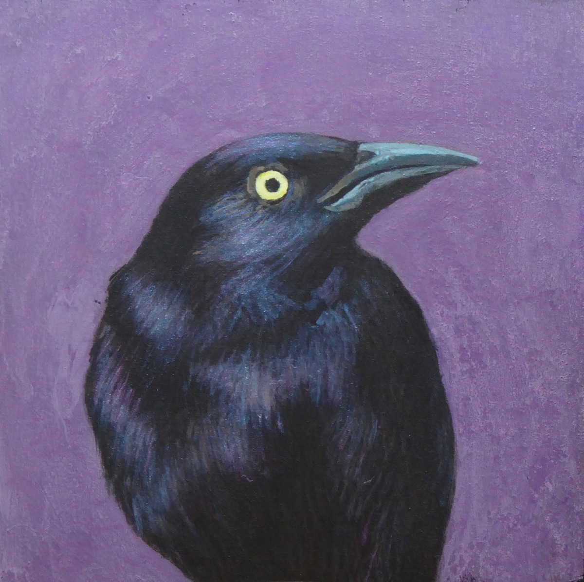 Grackle (large view)