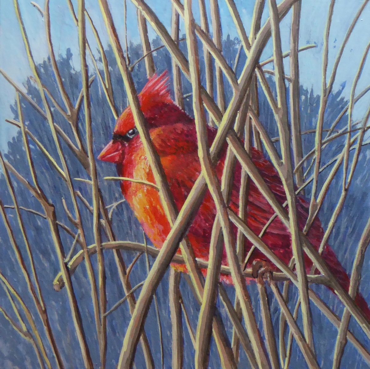 Male Cardinal at rest (large view)