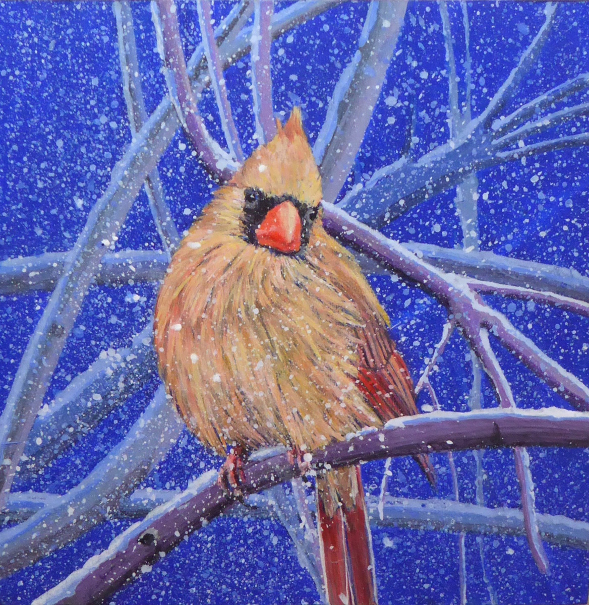 Female Cardinal in the Snow (large view)