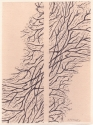 Branches 1 (thumbnail)