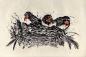 Swallow Babies (thumbnail)