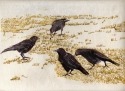 Four Crows on Grass (thumbnail)