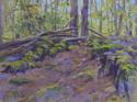 Bowdoin Park Woods (thumbnail)