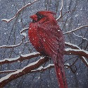 Cardinal in Snow (thumbnail)