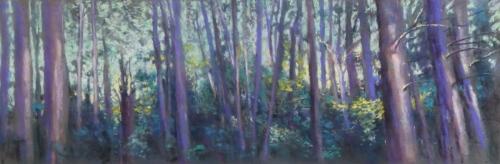 Woods At Pound Ridge