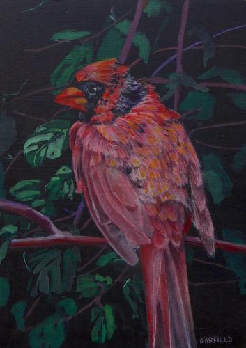 Male Cardinal in Summer