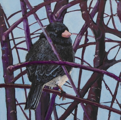 Junco: I know you're watching