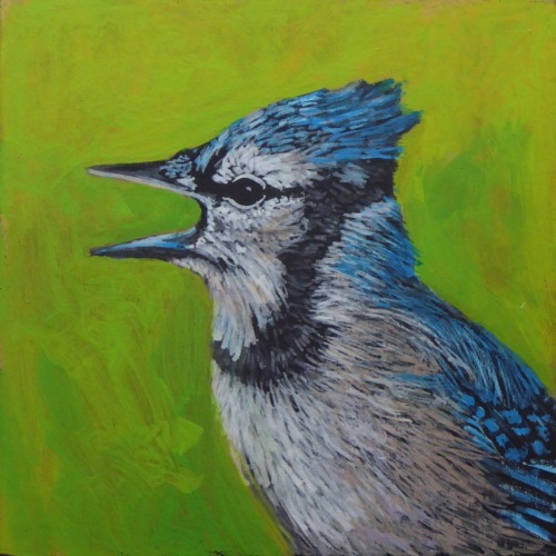 Painting--Acrylic-AnimalsBlue Jay