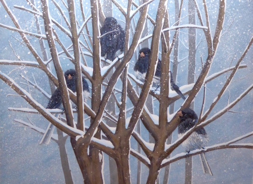 Juncos in Snow