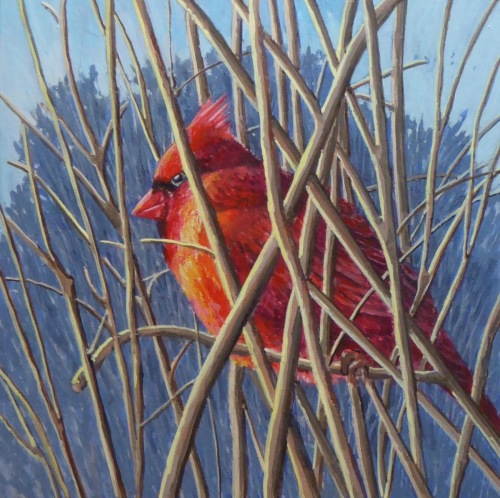 Male Cardinal at rest