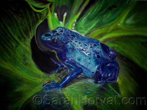 Blue Poison Dart Frog by Sarah Horvat