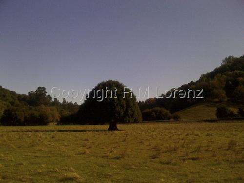 Meadow Tree by Rachel Lorenz