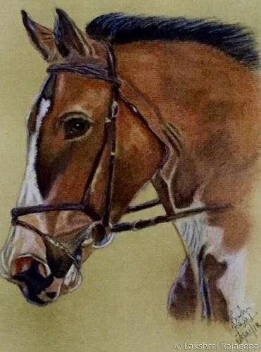Study of a horse by Lakshmi Rajagopal