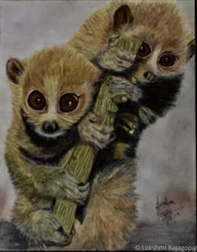 Slow Loris [endangered species] by Lakshmi Rajagopal