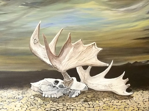 Moose skull in the desert