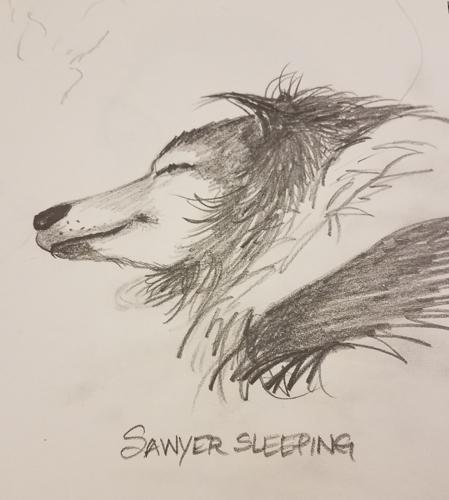 My dog Sawyer