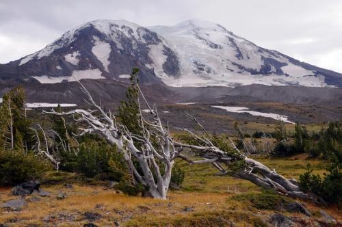 Mt Adams 4755
