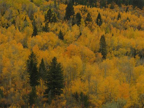 Aspen Hillside 8412
