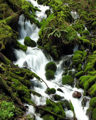 Wahkeena Creek 3012