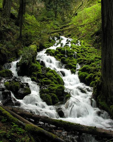 Wahkeena Creek 3112