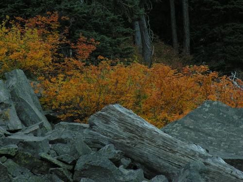Autumn Sumac 9703