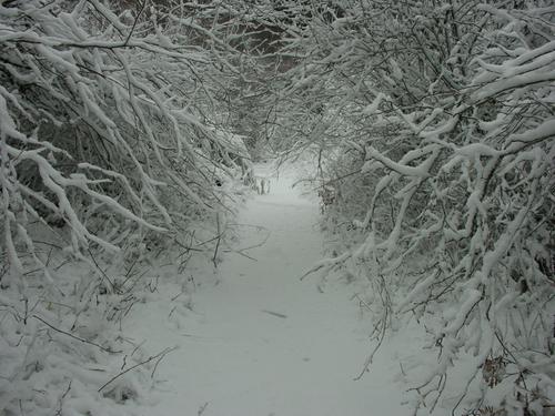 Hamilton Mtn Trail 5063