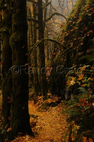 Enchanted Forest_5653_110212