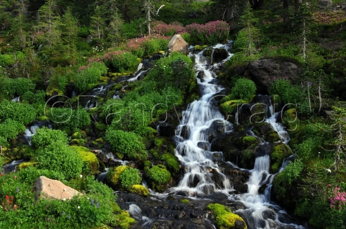 Waterfall_Bird Creek Meadow_1548_080413