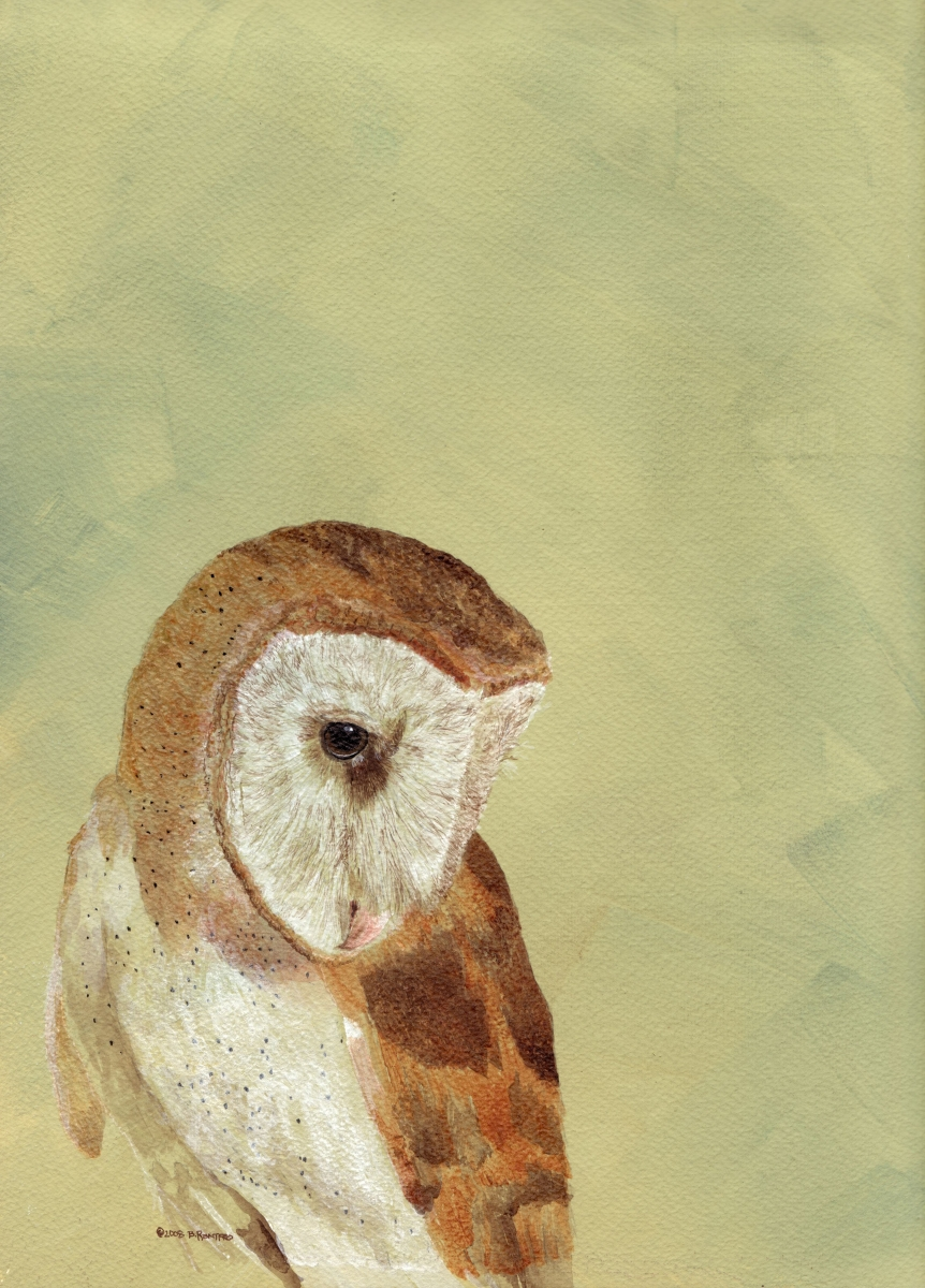 Barn Owl - Moonlight Sonata #VII  (large view)