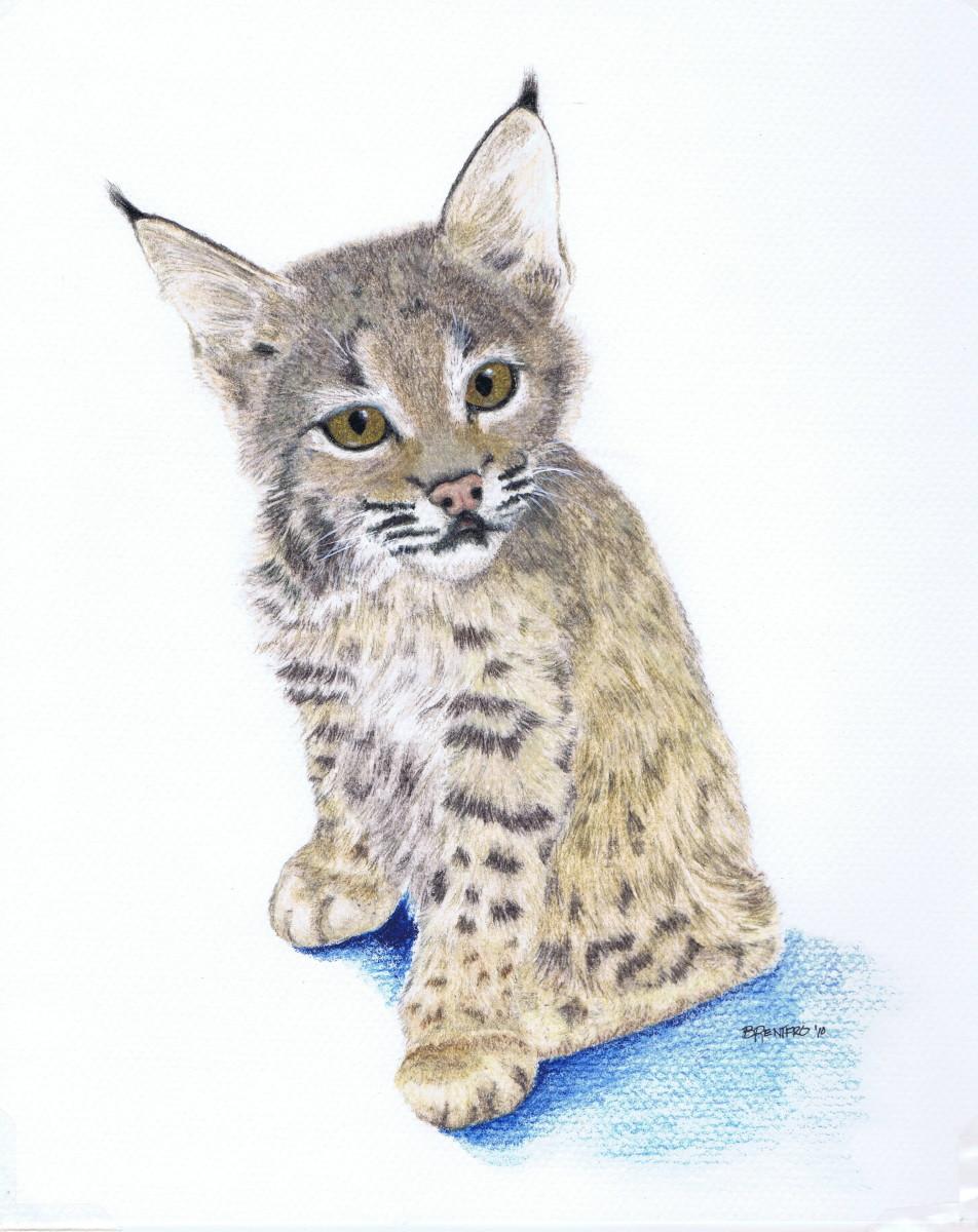 Bobcat Kitten (large view)