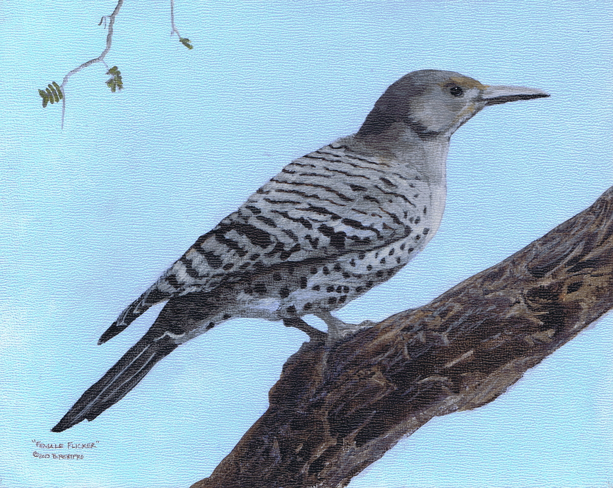 Flicker - Female (large view)