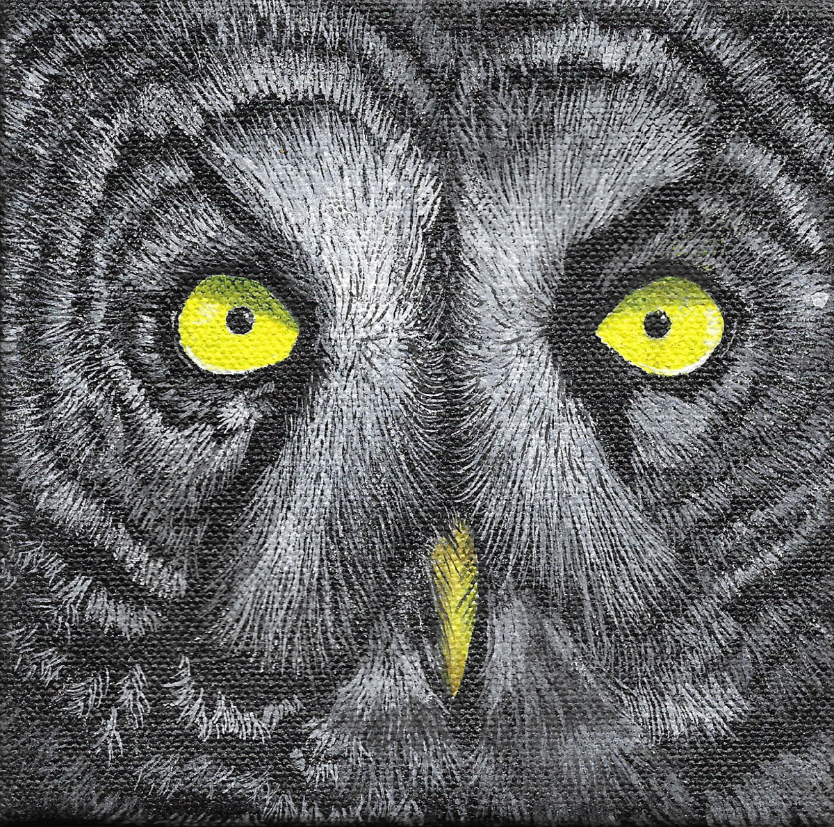 Great Gray Owl (large view)