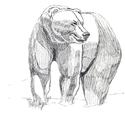Grizzly sketch